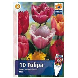 Tulipany Postrzępione