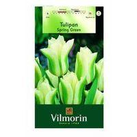 Nasiona, Tulipan zielonokwiatowy SPRING GREEN 6 szt. cebulki kwiatów VILMORIN
