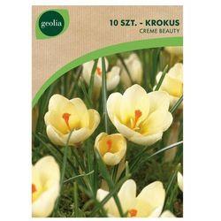 Krokus botaniczny CREAM BEAUTY 10 szt. cebulki kwiatów GEOLIA