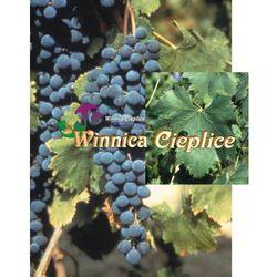 Sadzonka winorośli Merlot rabat 8%