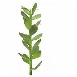 EUROPALMS Sadzonka drzewa money, sztuczna roślina, 30 cm