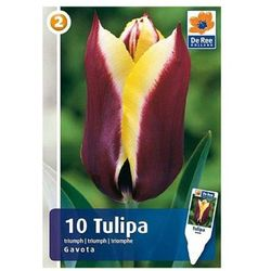 Tulipany Gavota M