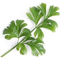 Véritable - Warzywa Liściowe - wkład nasienny - seler zwyczajny (do doniczek autonomicznych)