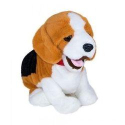 Pies Figo mądry szczeniak - Norimpex