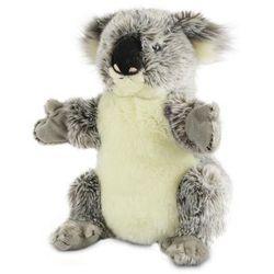 Koala australijski Pacynka