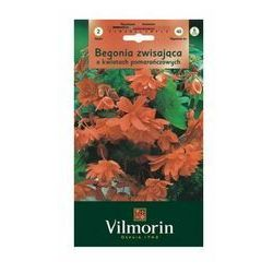 Begonia zwisająca ORANGE 2szt. VILMORIN